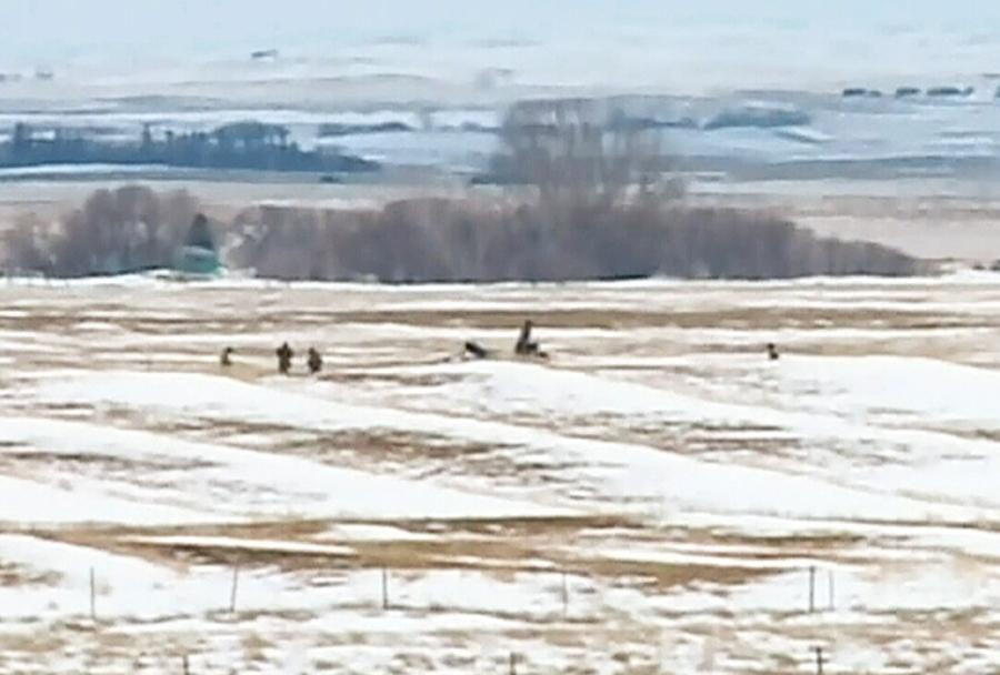 Mesto strmoglavljenja kanadskega letala CT-156 harvard II
