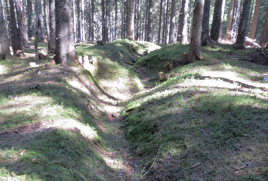 Primer jarka Savske linije v gozdu na Pokljuki